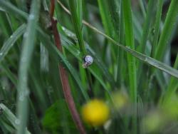 Snäcka i gräset, Åsvik. Foto: Andreas Wallberg